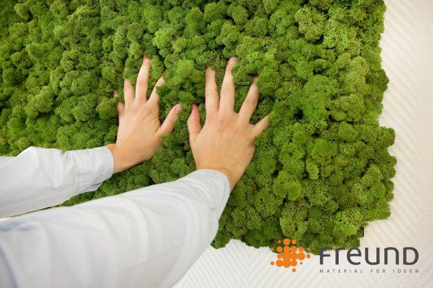 Gesunde wohlf hlr ume begr nungssysteme aus moos und for Moos bilder pflanzen