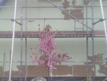 Fassadensanierung in Treuenbrietzen: beim Putz entfernen