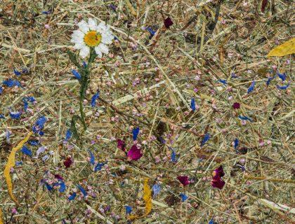 Maler Reichenbach Organoid Naturoberflaeche Wandgestaltung Surface ALMWIESN